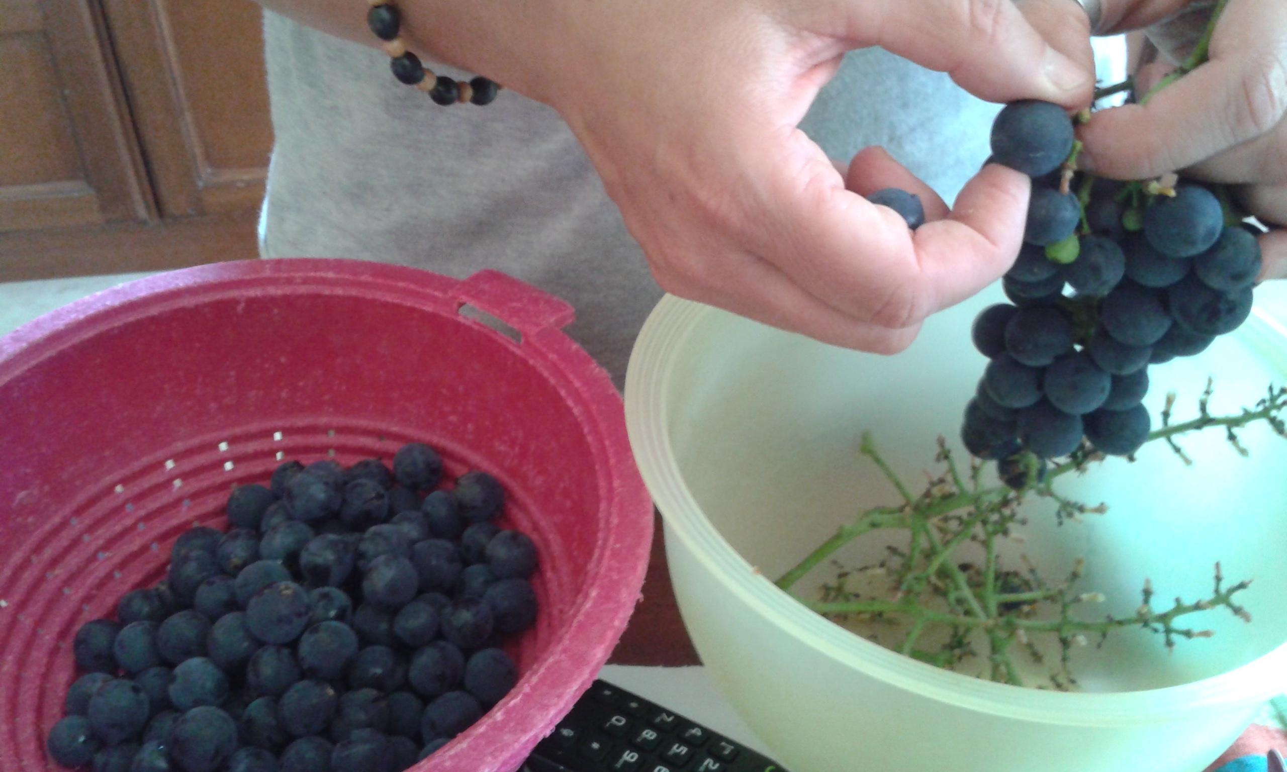 Liquore di uva fragola ricette e prodotti per vegani for Uva fragola in vaso